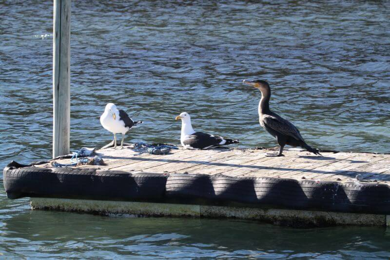 birds-on-jetty