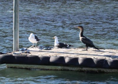 the-marina (11)